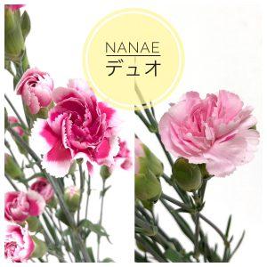 nanae%e3%83%87%e3%83%a5%e3%82%aa