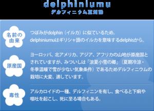delphiniumu_info